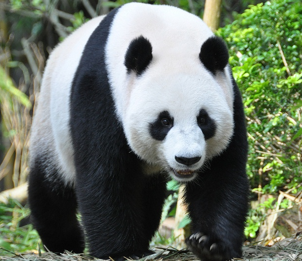 What Does Googles Panda 40 Update Mean Vuelio
