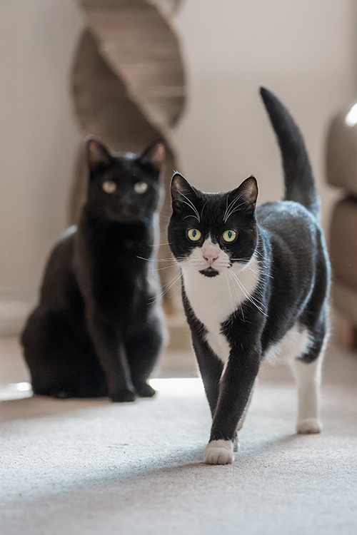 Oliver-and-Nubia