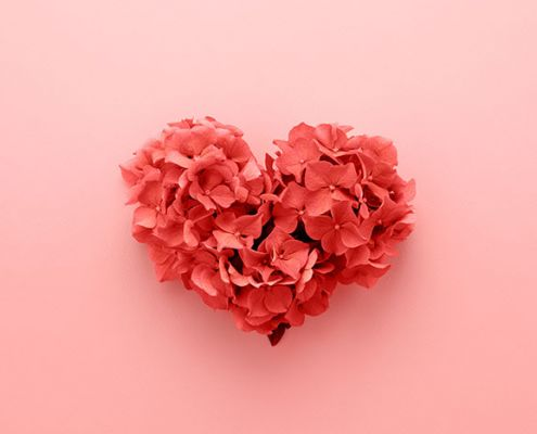 petals in the shape of a heart