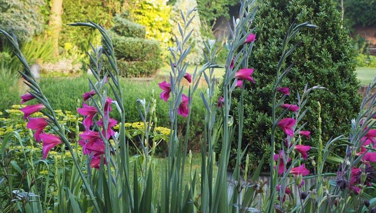 Alexandra Campbell garden 2
