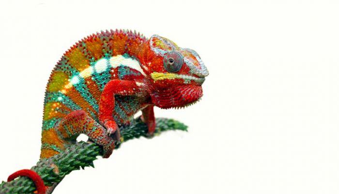 Chameleon brands