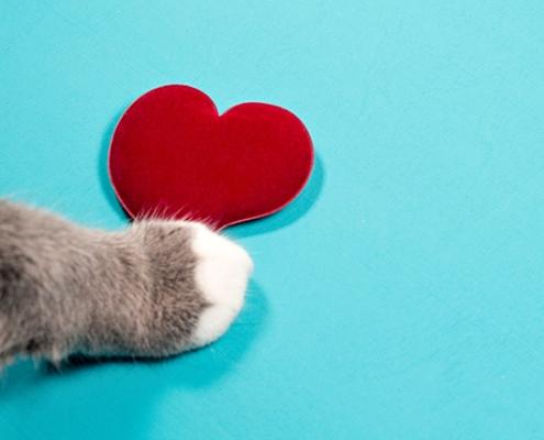 Top 10 Pet Blogs