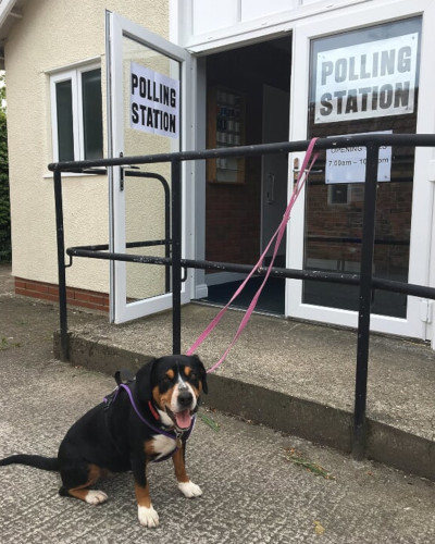 Alfie's Diary At The Polling Station