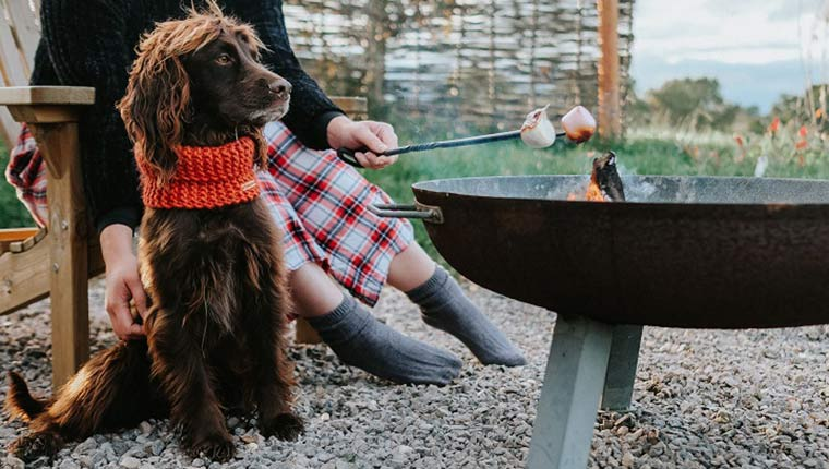 Spaniel and camp fire