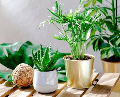 Top 10 Gardening Blogs in the UK