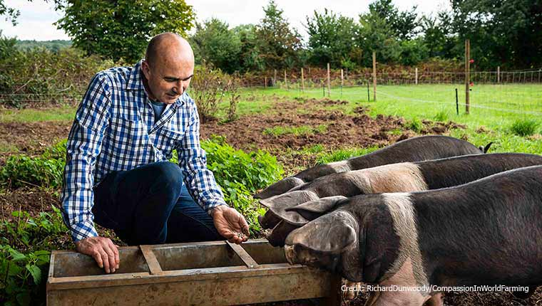 Philip Lymbery and pigs