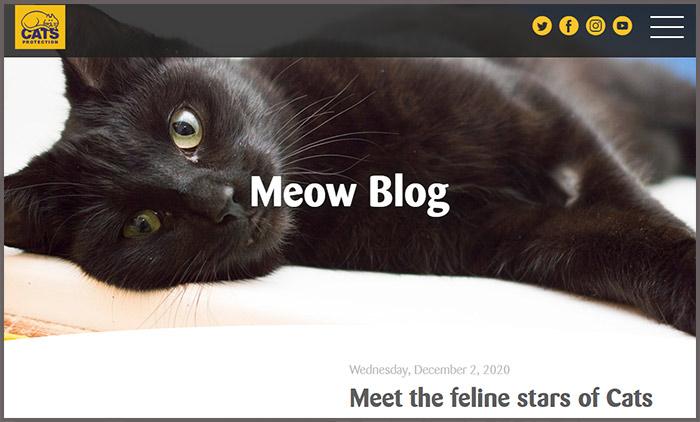 Meow Blog