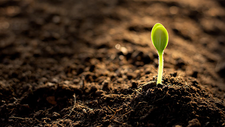 Sustainably managing the soil is crucial to biodiversity